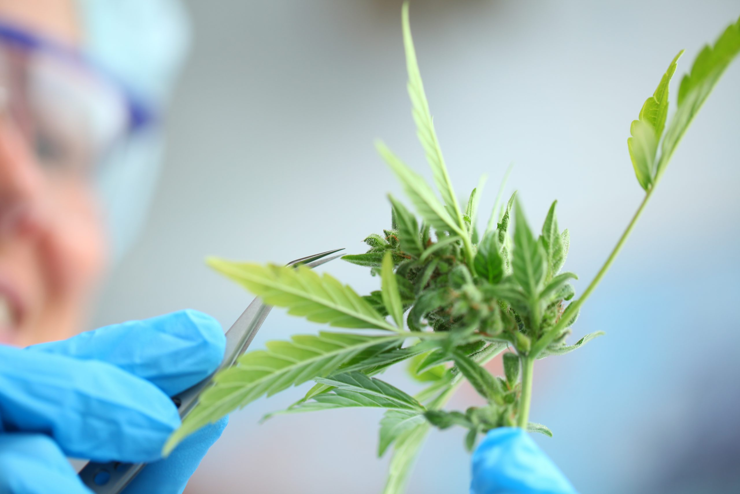 Here are Some Medical Possibilities Offered by CBD The rising global adoption of CBD
